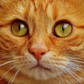 Россиян могут обязать платно регистрировать собак и кошек