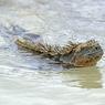 Чрезвычайная ситуация в раю: под угрозой черепахи и игуаны