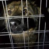 В России создана Декларация прав животных