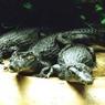 Домодедовская таможня обнаружила чемодан, полный змей и крокодилов