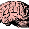 Ученым удалось преобразовать сигналы в мозге в четкую речь