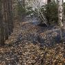 Поджигание травы может стать уголовно наказуемым