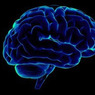 Курение приводит к изменениям в коре головного мозга