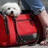 Большая сумка - позор женщины: грядет новая мода (ФОТО)