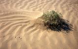 В пустыне Деште-Лут иранские ученые нашли обломки, предположительно, метеорита