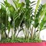 Названы лучшие «кухонные» растения, очищающие воздух от токсинов
