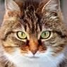 Впервые в России коронавирус выявили у кошки - её тоже отправили на карантин