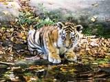 Яблоко от яблони: детеныш тигра Амура подружился с хорьком (ВИДЕО)