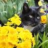 Кошачий психиатр отгоняет страшные сны от котенка (ВИДЕО)