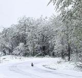 Синоптики рассказали, когда в Москве выпадет снег
