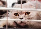 """""""Аэрофлот"""" всё же меняет правила перевозки животных, но не так, как добивались их владельцы"""