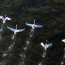 Самолёт, летевший из Москвы в Петербург, столкнулся с птицей