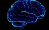 Большой объем мозга ряда приматов является результатом любви к фруктам - ученые