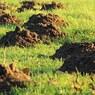 Россияне массово оспаривают кадастровую стоимость земли