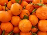 В Ставрополье бульдозеры уничтожили 225 кг турецких мандаринов