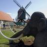Россия - родина слонов (волосатых) (ФОТО)