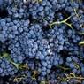 Исследователи рассказали о пользе красного вина при повышенном давлении