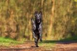 Итальянка добилась оплаты больничного по уходу за собакой