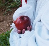В субботу на Арбате сигареты будут менять на яблоки