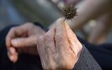 Ученые объяснили способность человека доживать до старости