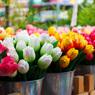 Эксперты прогнозируют 2−3 кратное подорожание цветов