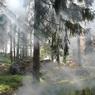 Дым от пожаров в Сибири достиг Аляски и Канады