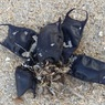 Ученые объяснили массовое появление «кошельков русалок» на побережье Америки