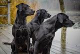 «Один не за семь»: ученые разработали формулу определения точного возраста собак