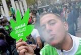 Грамм марихуаны в уругвайских аптеках будет стоить меньше доллара