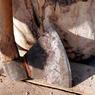 Обиженная теща избивала зятя до тех пор, пока не сломала об него топор