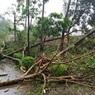 "В Индии из-за мощнейшего циклона ""Фани"" погибли три человека"