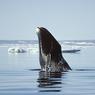 Линия российской обороны пойдет через Арктику