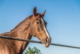 Камчатский депутат приехал на заседание на коне из-за цен на бензин
