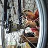 Велопрокат St.Petersbike готов открыться в мае