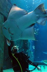В Израиле акула откусила аквалангисту руку