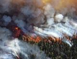 Минприроды предложило пересмотреть права губернаторов после лесных пожаров