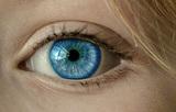 Ученые обнаружили неожиданно простой способ восстановить зрение