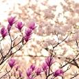 Синоптики рассказали, когда наступит климатическая весна