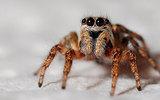 Ведущий телеканала WGRZ испугался «гигантского» паука