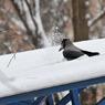 Синоптики рассказали, что зима в Москве установила рекорд по раннему наступлению