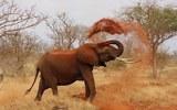 Взбешенный слон несколько километров преследовал туристов на автомобиле в ЮАР