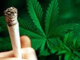 Любители травки в Колорадо пострадали от легализации марихуаны