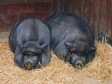 Минсельхоз обяжет россиян сообщать о домашних животных в подсобных хозяйствах