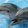За год в США от неизвестного вируса погибли более 1 000 дельфинов