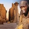 Древнеегипетские мумии павианов пролили свет на затерянное царство Пунт
