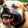 Собака растерзала ребенка-грудничка в Якутии