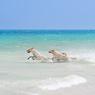 Италия: В Римини открылся пляж для собак