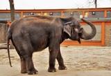 Индийский слон насмерть затоптал пять человек