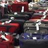Доставленный во «Внуково» багаж из Египта прошел усиленный контроль