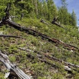 Разгадана тайна падения тунгусского метеорита